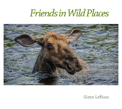 Friends in Wild Places